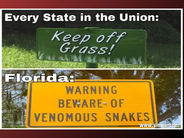 Florida Snake Meme
